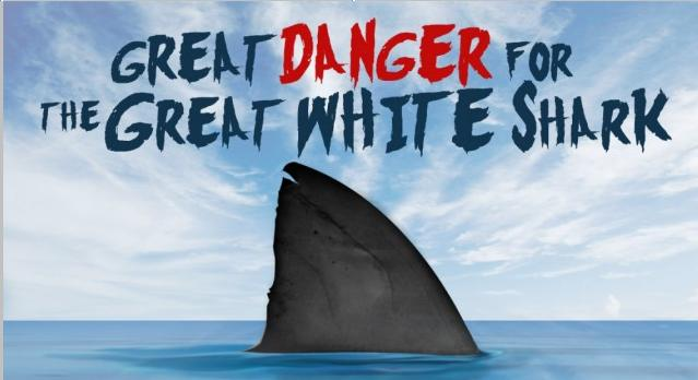 The Great Danger For The Great White Shark Main