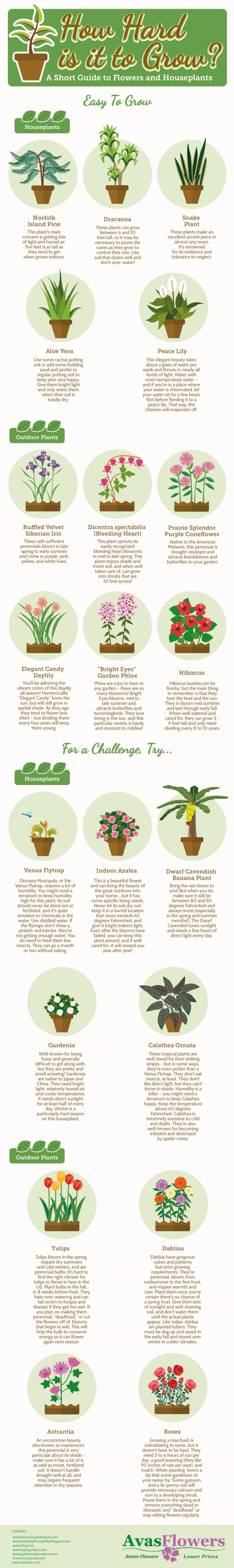 How Hard Is It To Grow - A Short Guide To Flowes And Houseplants