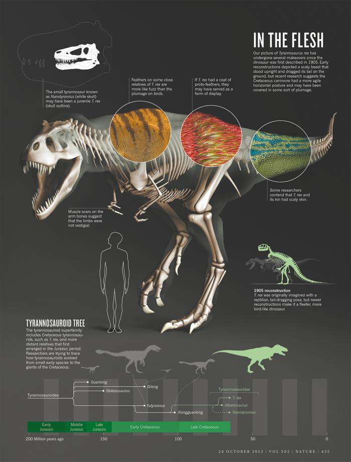 The Truth About T-Rex