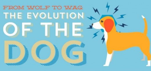 wag the dog the movie essay Read this essay on wag the dog reaction paper come browse our large digital warehouse of free sample essays i background information wag the dog is a hilarious new satire movie directed by barry levinson.
